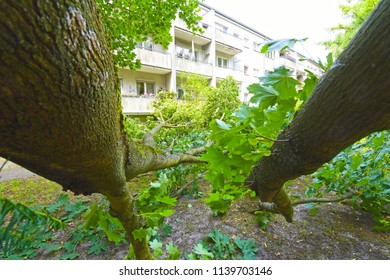 Storm damage with fallen tree, which narrowly missed a house after heavy wind in Berlin, Germany