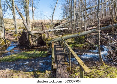 Storm damaged forest by footpaths