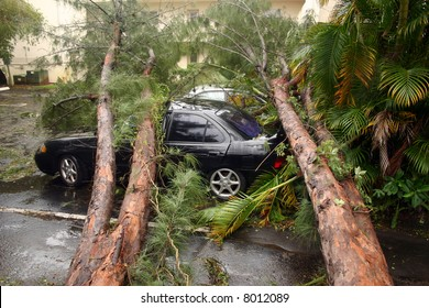 Storm damaged pine tree fell on top of cars.