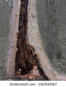Storm damaged tree trunk. Fits themes for resilience, damaged, storm effects, nature.
