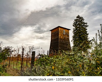 Storm over a Napa Valley Vineyard, California, USA
