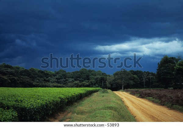 storm over tea plantation and forest