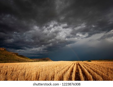 Storm over the wheat fields, with rainbow