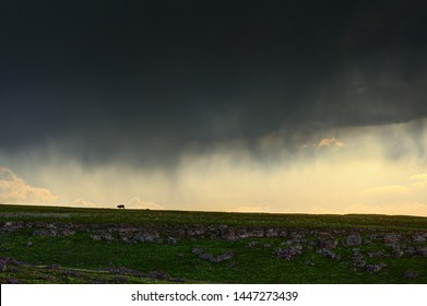 Storm with poring rain in the field.