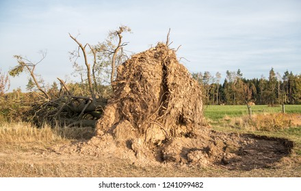 Storm, uprooted tree