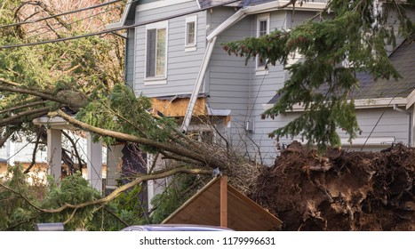 Storm wind uprooted a tree which has fallen down onto a residential house.