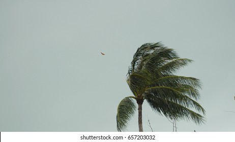 Storm winds blowing palm trees on tropical island