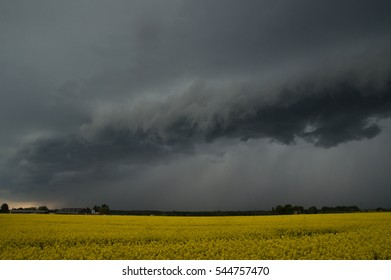 Stormy clouds and rape blossom