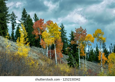 Stormy gray clouds above a steep hillside of orange and yellow Quaking Aspen trees and sagebrush in Jackson, Wyoming