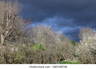Stormy overcast skyline with clouds over bare trees landscape