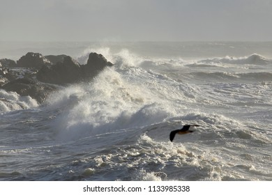 Stormy seascape. Northern portuguese rocky coast during winter.