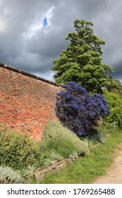 Stormy skies over colorful flowering shrubs in an old walled garden
