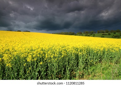 Stormy Sky over a Rapeseed Field near Groombridge, UK