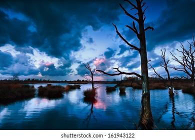 stormy sunset over bog with dead trees, Dwingelderveld, Drenthe, Netherlands