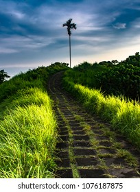 Stormy weather threatens a hiking trail in Bali, Indonesia that follows a stone path lined by wild grass and palm trees