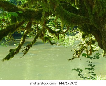 Story in greens for this photo of a very mossy tree, green leaves and a green river (Doubs near Goumois, Jura)