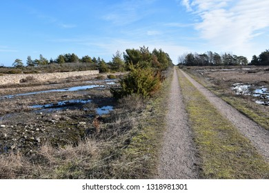 Straight country road through a plain landscape by spring season at the swedish island Oland