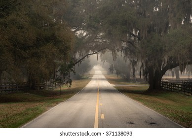 Straight empty lonely country road street less traveled in Florida and trees with Spanish moss overhanging on a cloudy foggy day looking grim sad isolated moody