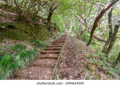 straight forest trail at mountain area of  Madeira Island