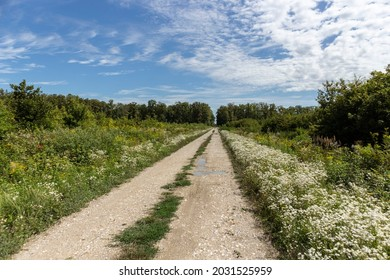 Straight gravel road passing through the famous hunting grounds of Turopoljski Lug, beautiful old forest and pastures near the city of Zagreb, Croatia