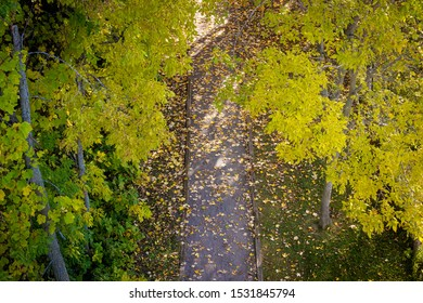 straight path in the forest at fall with fallen leaves on the ground