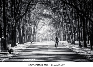A straight road. There is a bicycle rider going along the road. The leisure image is framed using the rows of trees along the road side. It is an pleasing image. The word on the road says 'slow'.