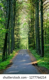 a straight road through the fresh green forest