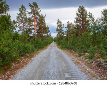 Straight scenic forest road in Oppland County of Eastern Norway, Scandinavia