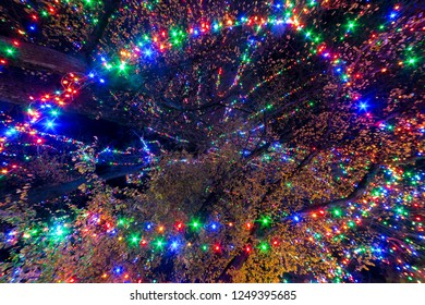 Straight up view of Christmas lights decoration on a big tree in a park