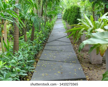 Straight Walkway Through Plants and Shrubs in the Park