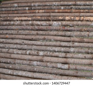 Straight Wood Branches making a Wall