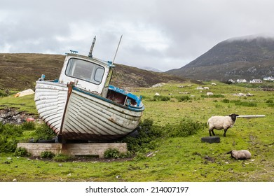 Stranded boat on a Scottish green field with sheep. Isle of Harris, Outer Hebrides, Scotland, UK.
