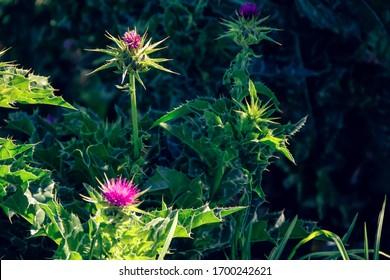 raras y hermosas flores silvestres andinas