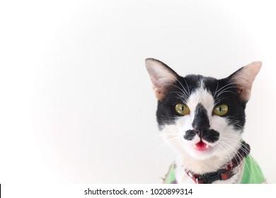 Strange coloring cat on white background