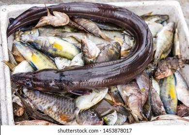 Strange eel like snake fish in box of freshly caught fish on a fishermen boat in Zakynthos Port, Zakynthos City, Ionian island, Greece