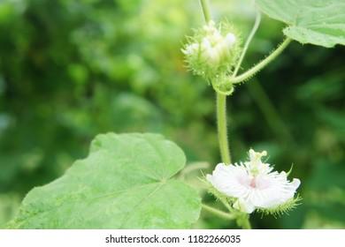 Strange flower in forest