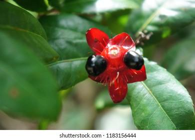 Strange flower in tropical