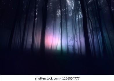 strange light in paranormal forest landscape at night