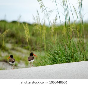 Strange Little Birds
