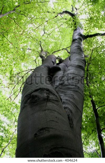 strange old tree