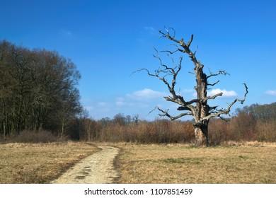 Strange tree in a park
