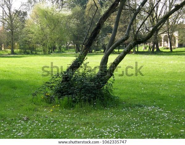 Strange tree position
