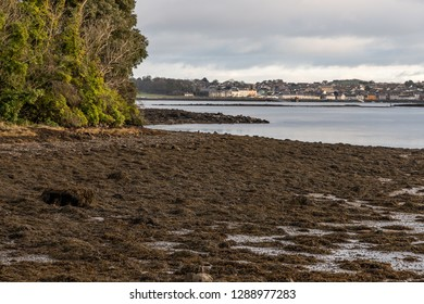 Strangford lough with Portaferry village in background, Northern Ireland, UK