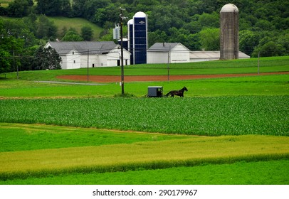 Strasburg, Pennsylvania - June 4, 2015:  Amish horse and buggy riding on a country lane past pristine farmlands, barns, and silos *
