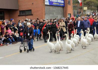STRATFORD - APRIL 07, 2019: Swans Parade in April 07, 2019 in Stratford, Canada