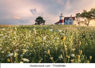 Stratford lighthouse  in a field of wild flowers
