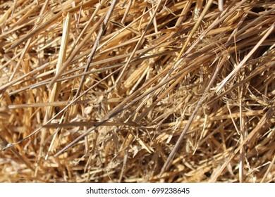 straw, Background of straw