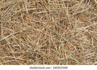 straw background farm texture agriculture gold hay