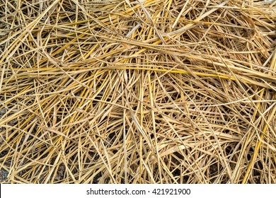 Straw background and texture of dry straw at farmhouse