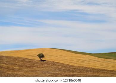 Straw Bale on the farmland in Tuscany.